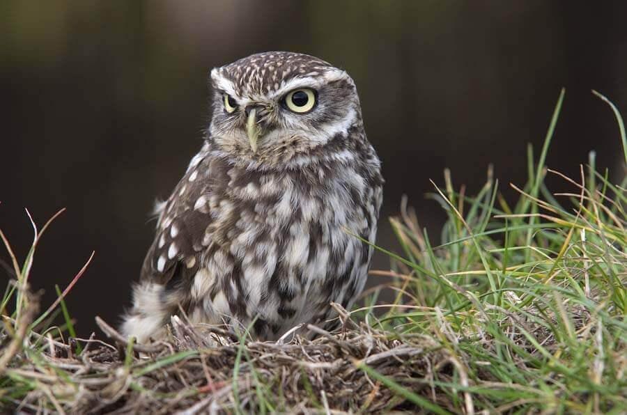Glos Barn Owl Ctre